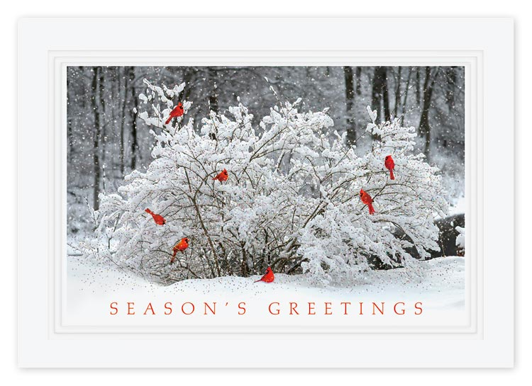 Custom greeting card with 7 red birds on a snow-covered tree in the forest.